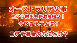 オーストラリア火事でコアラ救出も絶滅危機!日本ではなぜ報道されない?今できることは
